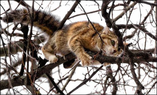 Фото Кот уцепился за ветку дерева, зима, фотограф Сергей Демянюк