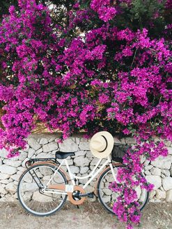 Фото Велосипед стоит у цветущего куста