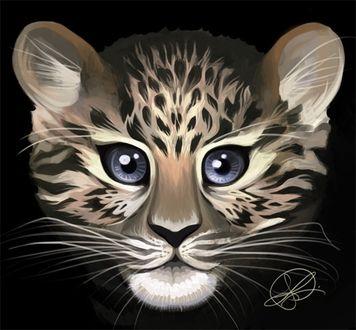 Фото Мордочка детеныша леопарда на черном фоне, by Thundercake