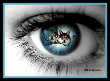 Фото В зрачке глаза отражается пара волков