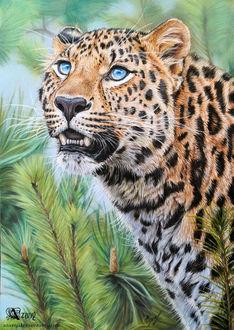 Фото Леопард с голубыми глазами, by Azany