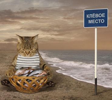 Фото Работа Места надо знать, кот сидит перед корзиной с рыбой, (клевое место), фотограф. Iridi