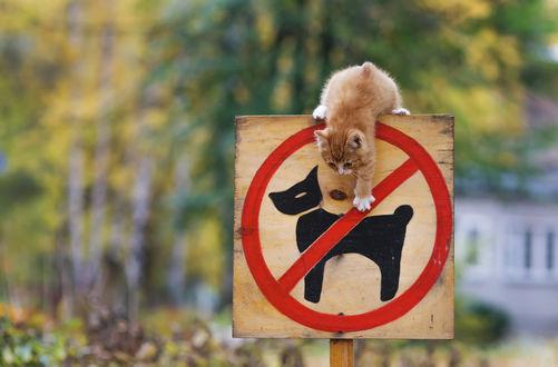 Фото Рыжий котенок сидит на знаке с перечеркнутой собакой, фотограф Елена Яковлева
