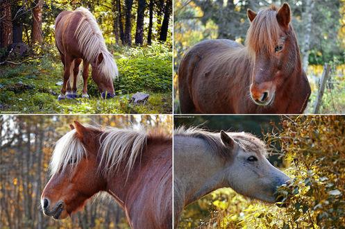 Фото Лошадь на природе, by Lambidy