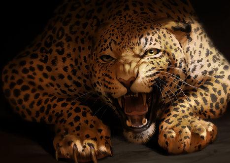 Фото Оскалившийся леопард, by Tamberella