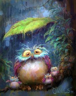 Фото Сова с совятами сидит на ветке под дождем, by MarcoBucci