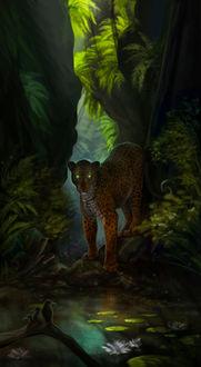 Фото Леопард стоит на берегу водоема в тропическом лесу, by Aivoree