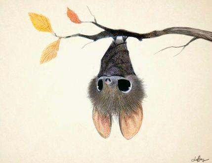Фото Летучая мышь висит на ветке, художник-иллюстратор Sydney Hanson