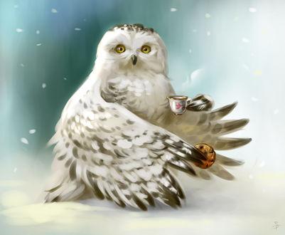 Фото Полярная сова пьет чай, идет снег