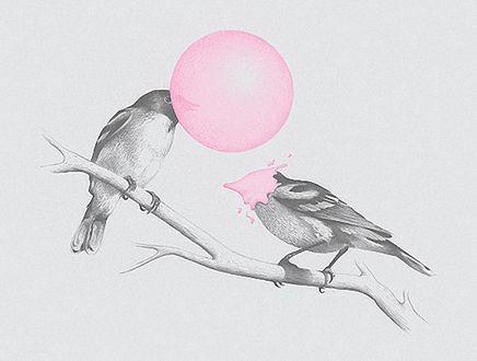 Фото Две птицы надувают шары из жевательной резинки, в одной пузырь лопнул прямо на клюве, by Brock Davis
