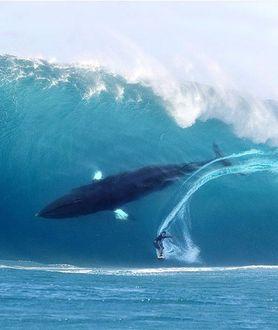 Фото Большой кит в большой волне с человеком на доске