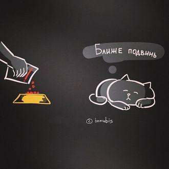 Фото Кот спит возле мисочки, в которую насыпают корм (Ближе подвинь), иллюстратор innubis