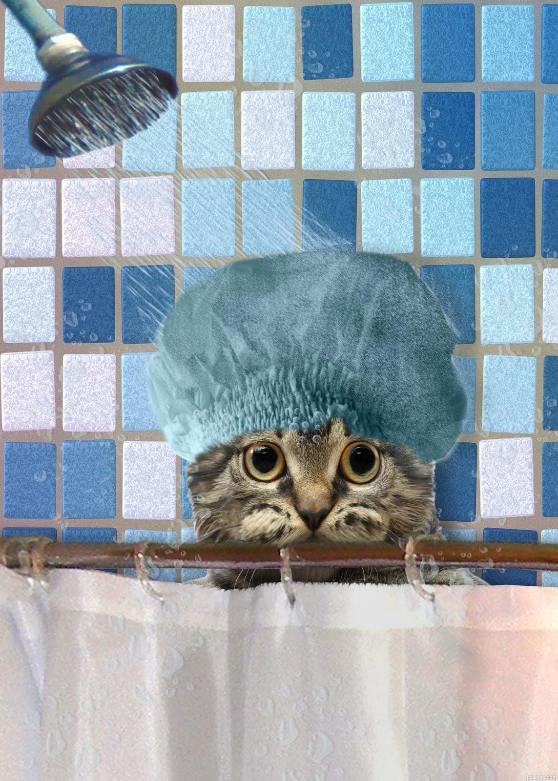 светлана фото кота в шапочке для душа длительное