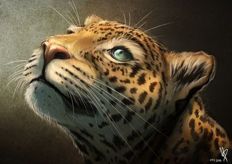 Фото Леопард смотрит вверх, by MaxiePerlberg