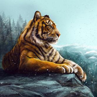 тигр под снегом фото