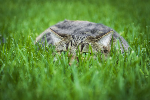 Фото Кошка лежит в траве