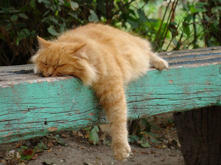 Фото Рыжий кот спит на скамейке, свесив вниз лапу, фотограф Mikhail Prokaznikov