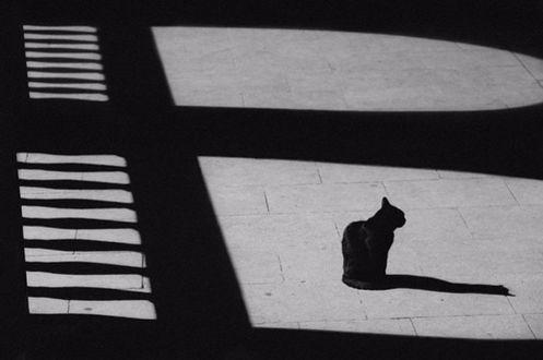 Фото Черная кошка сидит на каменном полу, на который падает тень от нее и тень от забора и арок