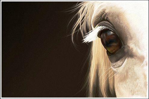 Фото Часть головы белой лошади с глазом, крупным планом, на темном фоне, by Cerona