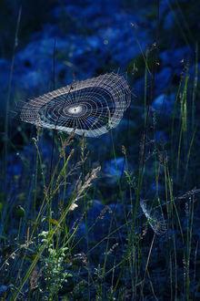 Фото Паутина на траве, фотограф Rucsandr Калин