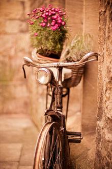 Фото Корзина с цветами на велосипеде, который стоит у стены