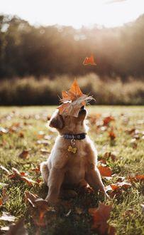 Фото Щенок под падающей осенней листвой