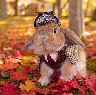 Фото Японский кролик Pui Pui в осеннем парке среди багряных листьев клена