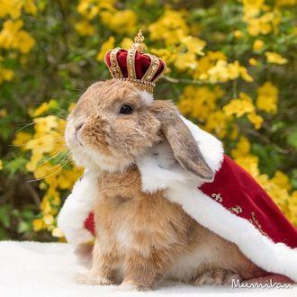 Фото Стильный японский кролик Pui Pui / Пуй Пуй с короной и в королевской мантии