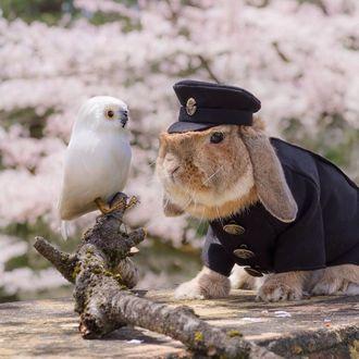 Фото Стильный японский кролик Pui Pui / Пуй Пуй в образе почтальона сидит рядом с попугаем