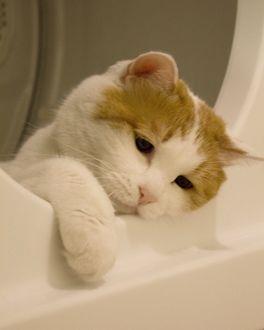 Рисунок грустного коте