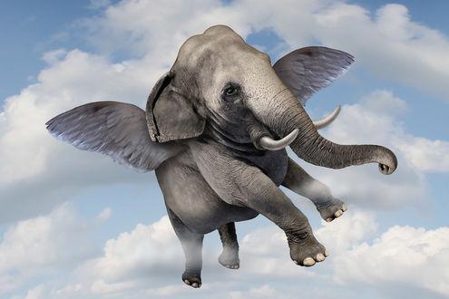 Фото Слон пролетает мимо нас в голубом небе