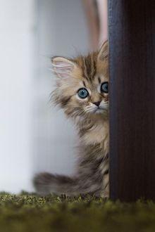Фото Грустный котенок выглядывает из - за двери