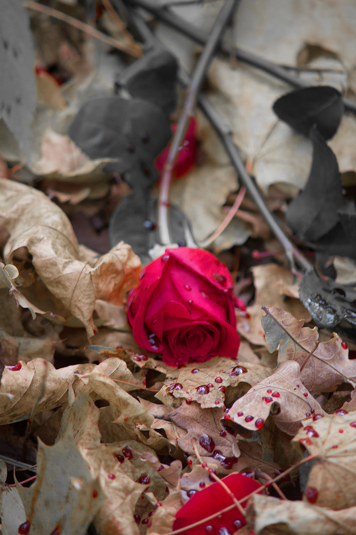 опавшие розы фото доставим ваш