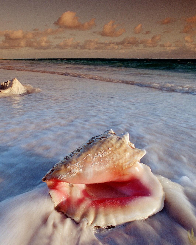 гиф ракушки море