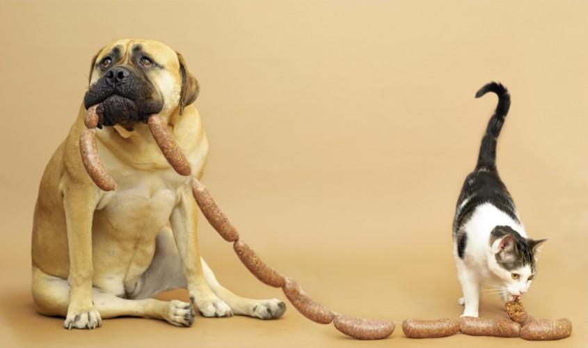 Фото Кошка и собака едят колбаски