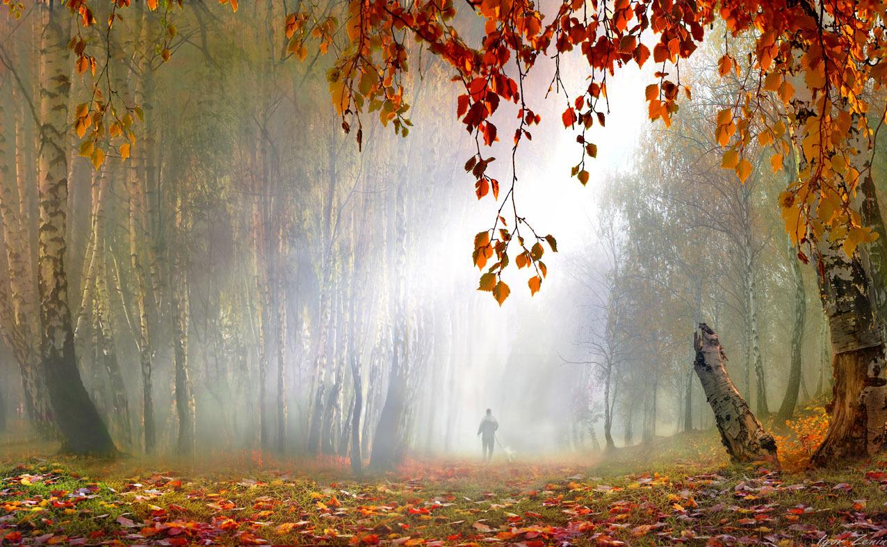 Фото Где-то в далеке, в туманном парке, прогуливается человек, фотограф Igor Zenin