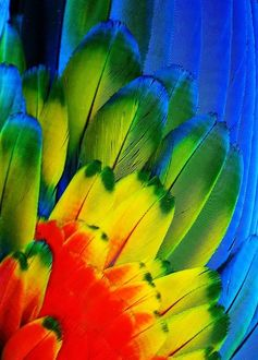 Фото Цветные перья попугая