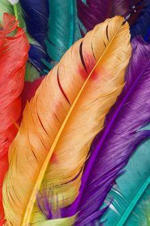 Фото Разноцветные птичьи перья