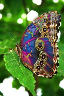 Фото Бабочка с радужными крыльями сидит на листке