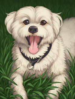 Фото Белая собака с высунутым языком лежит на зеленой траве, by KatieHofgard
