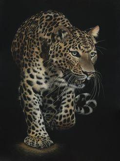Фото Крадущийся леопард, by shonechacko