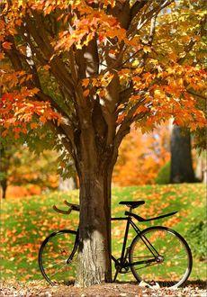 Фото Велосипед стоит у осеннего дерева
