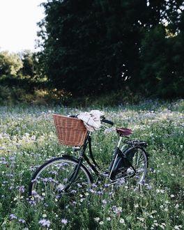 Фото Велосипед с плетенной корзинкой стоит в поле