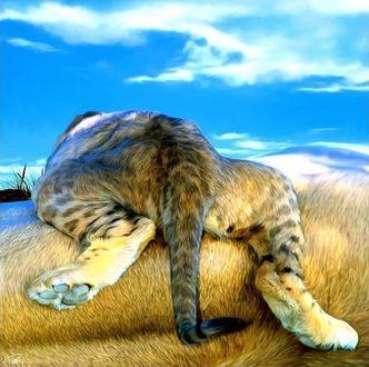 Фото Леопард лежит к нам задними лапами, художник Paul Miners