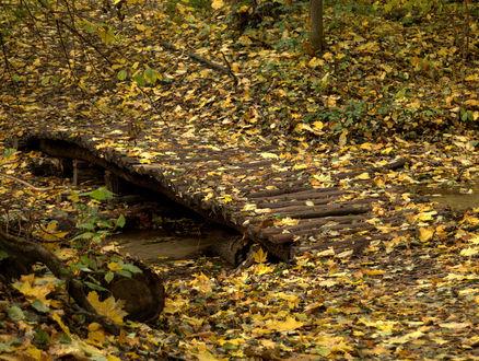 Фото Мостик в осеннем лесу, фотограф Ирек Фахрутдинов