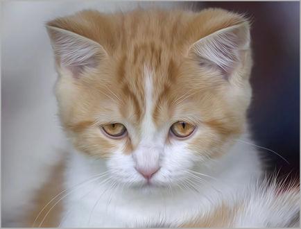 Фото Грустный рыжий котенок, by Елена Belika