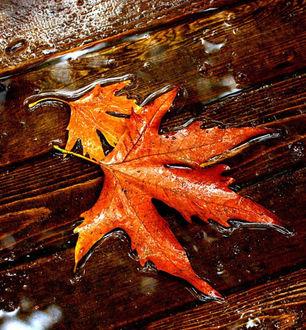 2fab54009cf Фото дождь осень (195 фото)