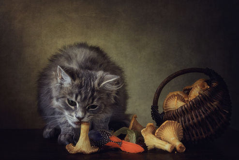 Фото Кошка ест грибы, by Daykiney
