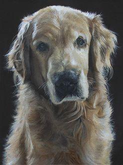 Фото Грустный пес на черном фоне