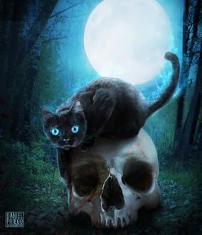 Фото Черная кошка сидит на черепе, by DanielPriego